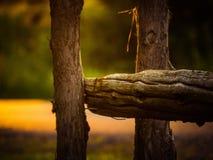 在日落的木篱芭 免版税库存图片
