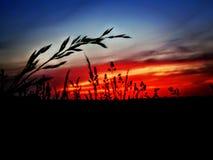 在日落的朴素 免版税库存照片