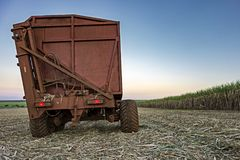 在日落的机械收获的甘蔗领域在圣保罗巴西-等待他们的在收获的拖拉机甘蔗领域的轮- 库存图片