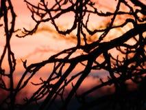在日落的枝杈 库存照片