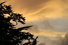 在日落的柏树 图库摄影