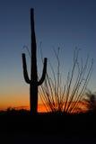 在日落的柱仙人掌仙人掌 免版税库存照片