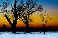 在日落的树剪影在斯诺伊风景 库存照片