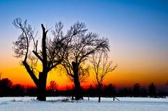 在日落的树剪影在斯诺伊风景 库存图片