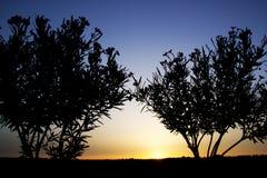 在日落的树剪影 免版税库存图片