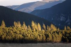 在日落的树在山上面 库存图片