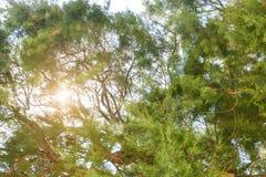 在日落的树在树荫下 免版税库存图片