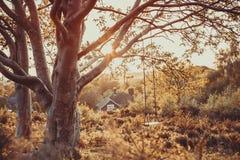 在日落的树摇摆 免版税库存图片