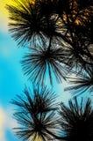 在日落的树枝。 免版税库存图片