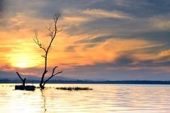 在日落的树死亡。 免版税库存图片