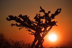 在日落的树 库存图片