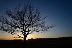 在日落的树 免版税库存图片