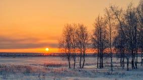 在日落的桦树在冬天 库存图片