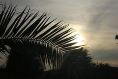 在日落的棕榈叶 免版税库存图片
