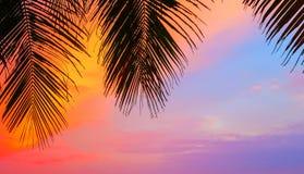 在日落的棕榈树剪影靠岸,马尔代夫海岛 免版税库存照片