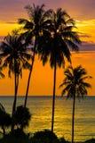 在日落的棕榈树剪影,泰国 免版税库存照片