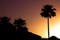 在日落的棕榈树剪影 库存图片