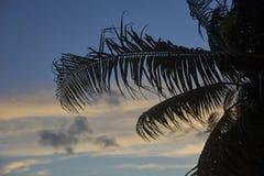 在日落的棕榈树叶子 库存图片