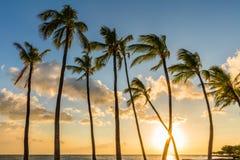 在日落的棕榈树在夏威夷 免版税库存照片