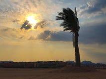在日落的棕榈树在晚上 免版税库存照片