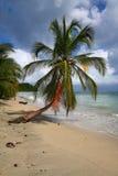 在日落的棕榈树在海滩 图库摄影
