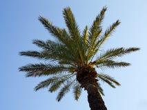 在日落的棕榈树在蓝天 免版税库存图片