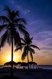 在日落的棕榈树,古巴 库存照片