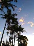 在日落的棕榈树 库存图片