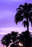 在日落的棕榈树 免版税库存照片