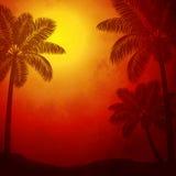 在日落的棕榈树 库存照片