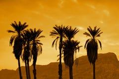 在日落的棕榈 免版税库存图片