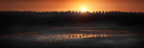 在日落的森林 免版税库存图片