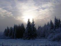 在日落的森林 库存照片