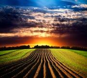 在日落的横向 图库摄影