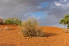 在日落的橙色沙丘与风雨如磐的云彩和天空蔚蓝背景 免版税库存照片