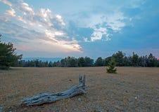 在日落的死的木日志在普莱尔山的Tillett里奇在蒙大拿美国 库存图片