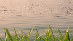 在日落的水表面行动 股票录像
