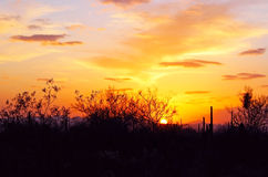 在日落的沙漠风景 库存照片