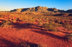 在日落的沙漠,内华达 库存照片