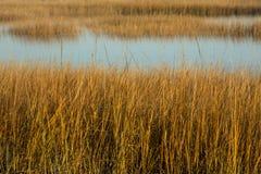 在日落的沼泽草在Milford的秋天指向,康涅狄格 库存照片