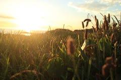 在日落的沿海草 图库摄影