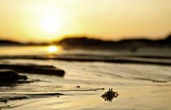 在日落的泥螃蟹 库存照片
