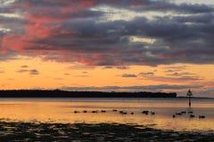 在日落的浅海湾,与天鹅现出轮廓的群  免版税库存照片