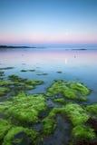 在日落的海岸线 库存照片