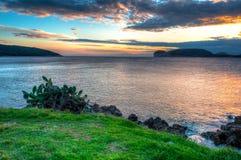 在日落的海景在与草和植物的冬天 免版税图库摄影