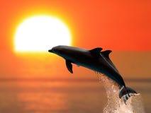 在日落的海豚 免版税库存图片