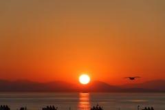 在日落的海鸥由渡船码头 免版税库存照片