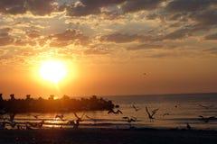 在日落的海鸥 图库摄影