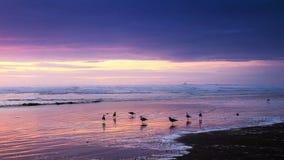 在日落的海鸥 库存图片
