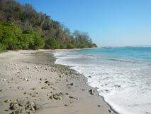 在日落的海滩狗 免版税库存图片